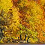 Herbstfarbenrausch am Bramfelder See
