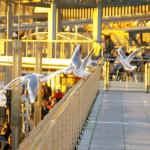Flughafen Landungsbrücken...