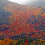 Farbenexplosion: knallbuntes Herbstlaub in den Adirondack Mountains.