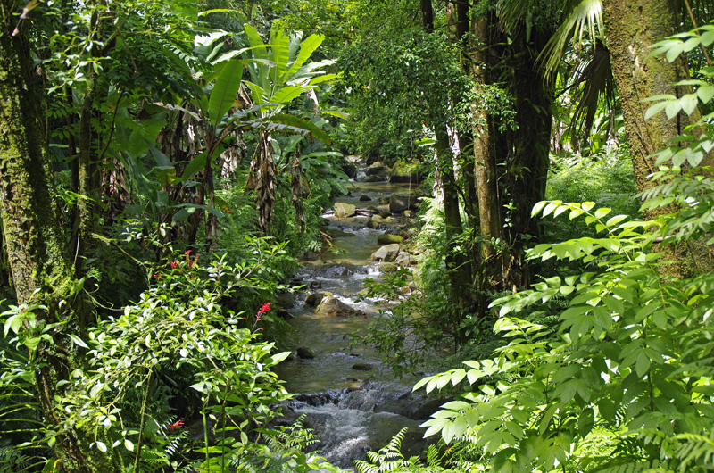 Big Islands grüne Seite.