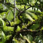 Big Island hat auch seine grüne Seite.