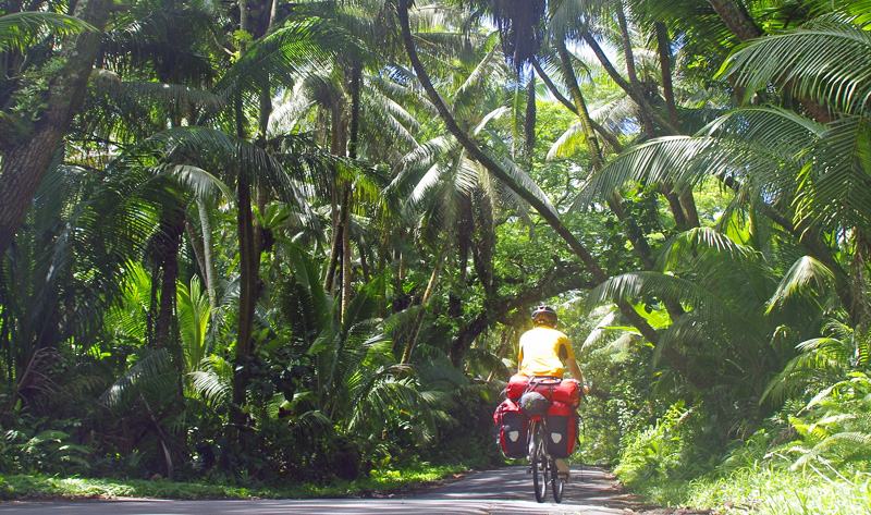 Mit dem Rad auf Big Island: mal Urwald, mal trockene und heiße Lavawüste.