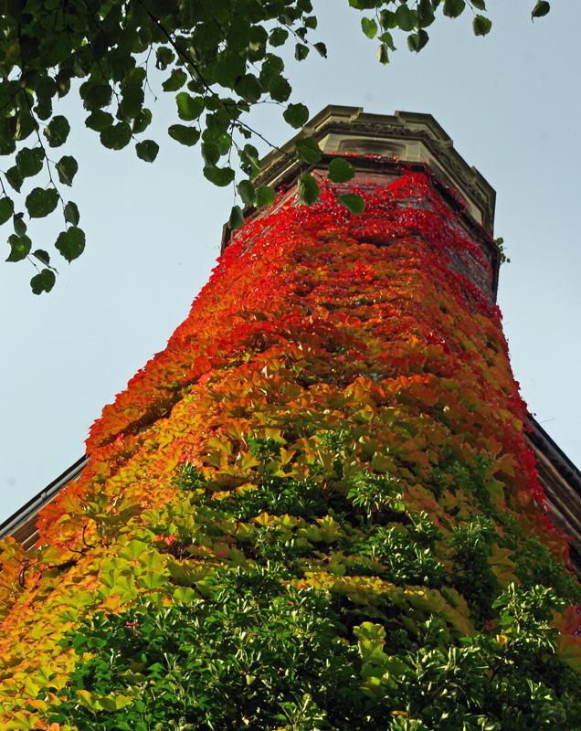 Herbstfarben: An einer Fassade an einem Gebäude in Hamburg hat sich das Laub verfärbt.