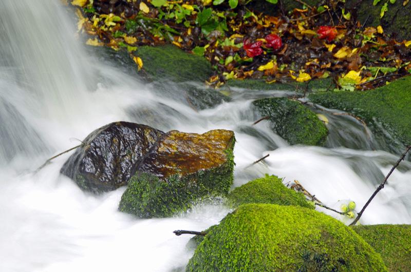Herbststimmung im Park Planten un Blomen in Hamburg