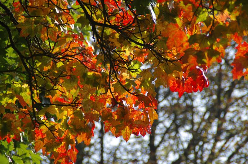 Herbsthaft