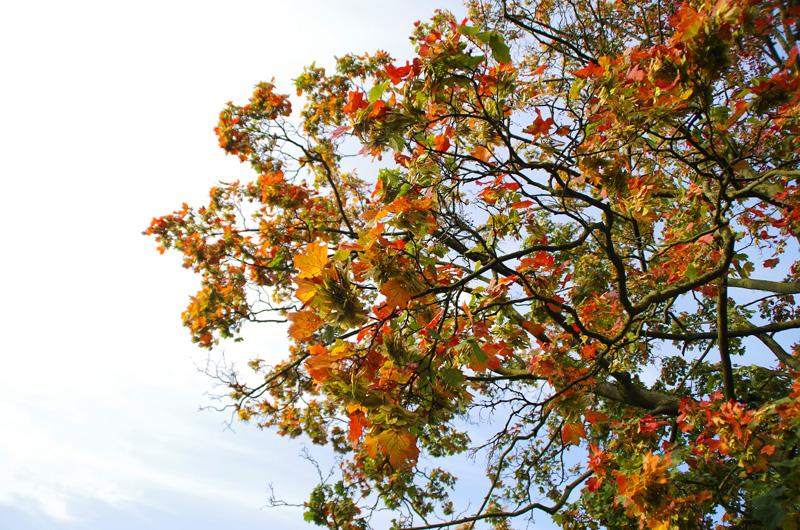 Herbststimmung: Buntes Herbstlaub im Park Planten un Blomen in Hamburg.